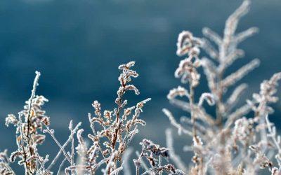 El retiro virtual de invierno te está esperando