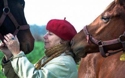 Homeopatía II: historias con caballos