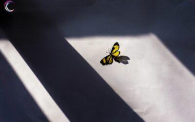 La sombra en nuestras vidas